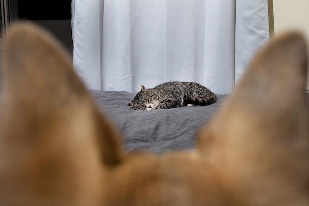 Nieuwsgierige hond kijkt naar kat die op bed slaapt
