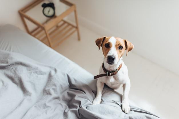 Nieuwsgierige hond op bed kijken