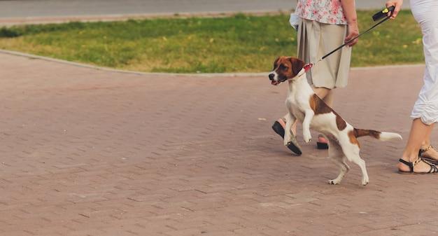 Nieuwsgierige hond vastgebonden met een riem
