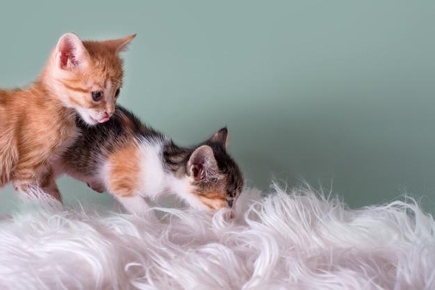 Nieuwsgierige kittens. kleine katten die thuis op bontdeken spelen. kleine huisdieren.