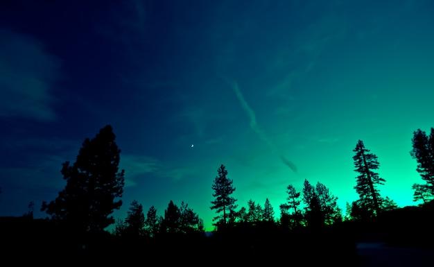 Noorderlicht boven bomen