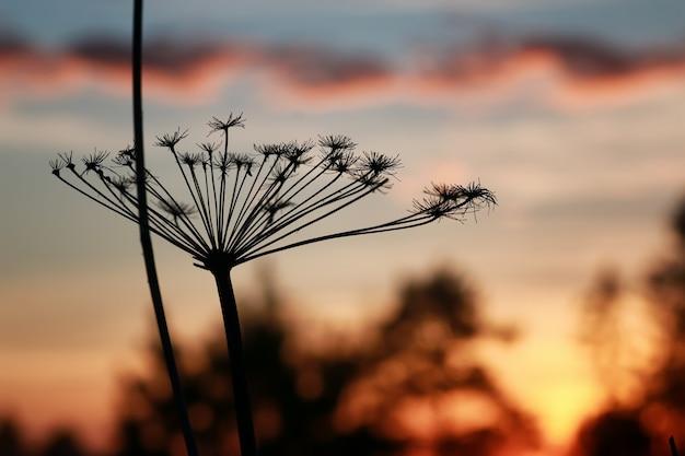 Noords zonsondergangsilhouet van tak