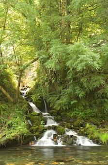 O courel rivier en bos