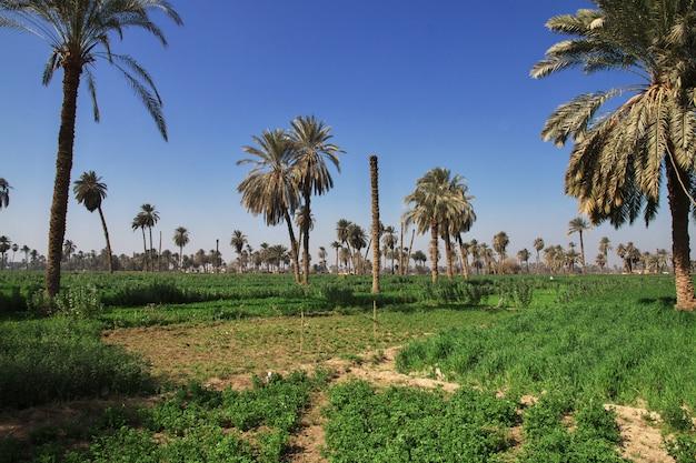 Oase in woestijn in amarna, egypte