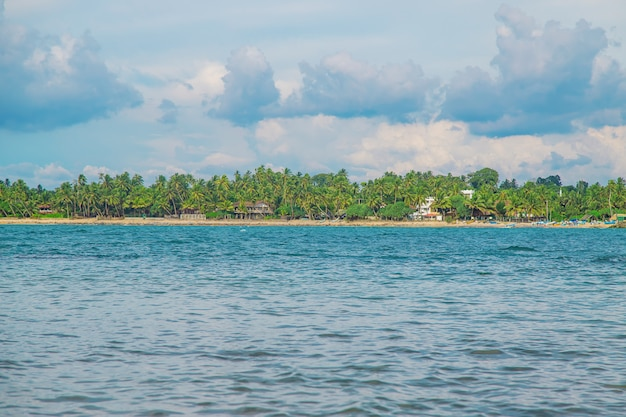 Oceaan sri lanka. natuur en palmbomen.