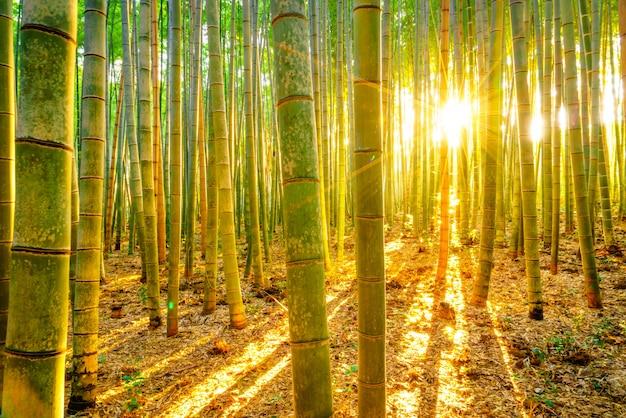 Ochtend fengshui klimaat leidingen licht