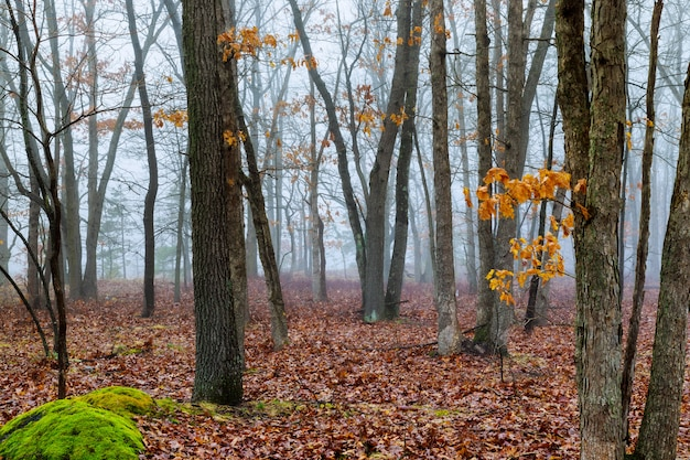 Ochtend in de herfst bos levendige herfst bos gebladerte