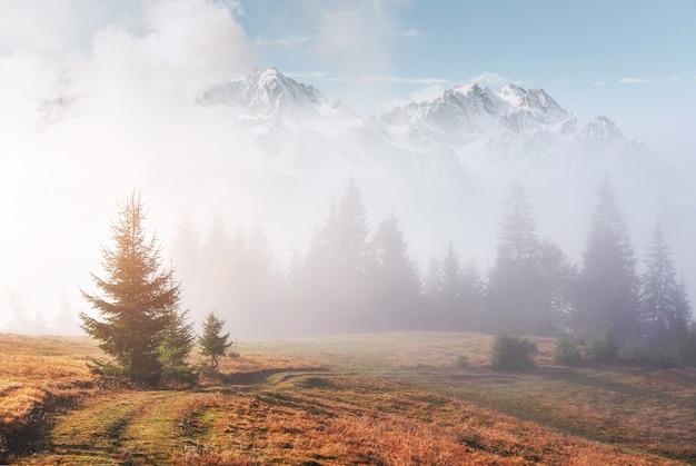 Ochtend mist kruipt met kladjes over herfst bergbos bedekt met bladgoud. besneeuwde toppen van majestueuze bergen op de achtergrond
