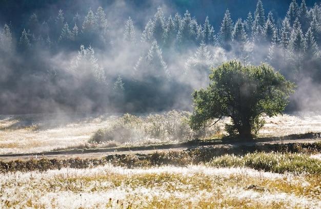 Ochtend mistig herfstberglandschap met populierenzaadbosjes op gras