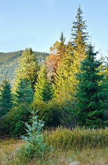 Ochtend mistige herfst berglandschap met populieren zaad bosjes op gras.