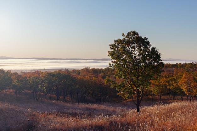 Ochtend uitzicht op de vallei bedekt met mist in de herfst seizoen