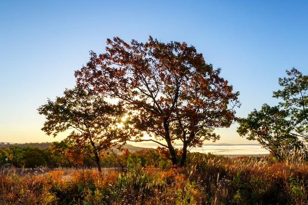 Ochtend uitzicht op de vallei en het bos met zon schijnt door de boom