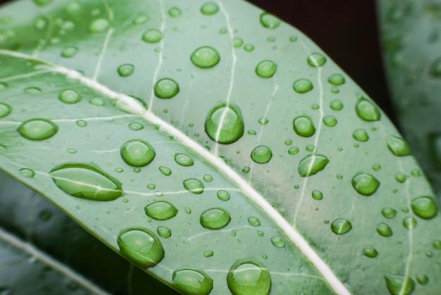 Ochtenddauw druppels op groene bladeren.