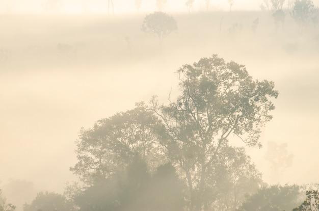 Ochtendhemel in het nationale parkbos met vage patroonachtergrond