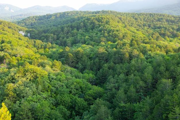 Ochtendlandschap, bergdal met groene bomen en rotsen.