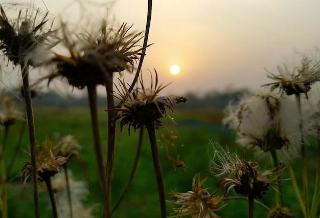 Ochtendlicht landschapsfotografie met zon