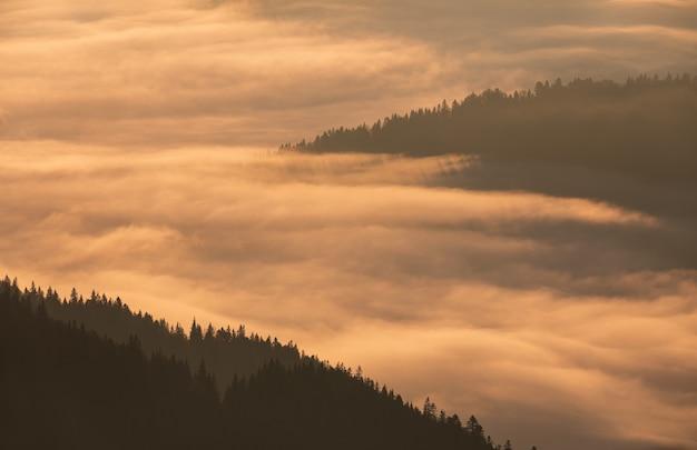 Ochtendmist in de vallei tussen de bergen bedekt met bos bij zonsopgang. natuurlijk landschap.