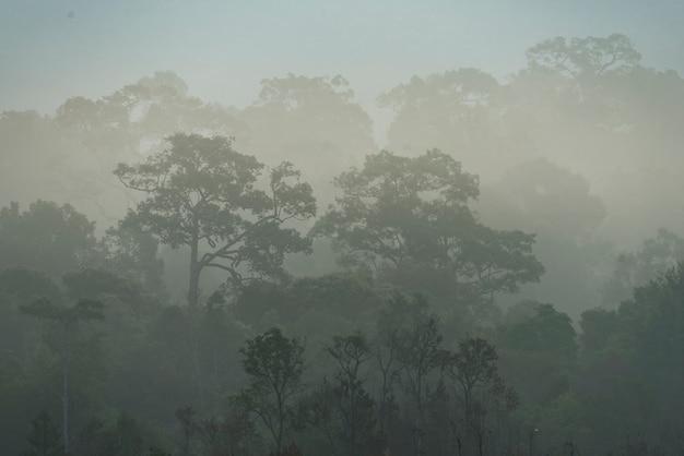 Ochtendmist in dicht tropisch regenwoud, thailand