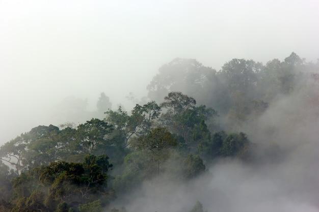 Ochtendmist in dicht tropisch regenwoud
