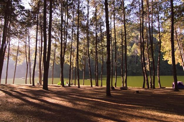 Ochtendscène in het bos met lange schaduw
