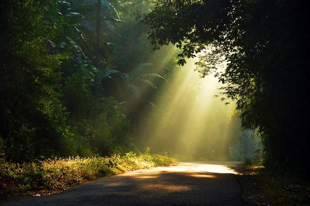 Ochtendzon lichte stralen die door de bomen doordringen