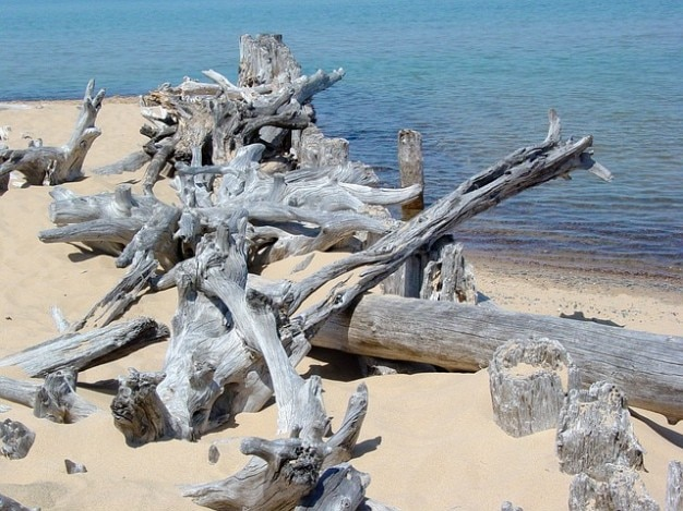 Oever van het drijfhout superieur strandzand landschap