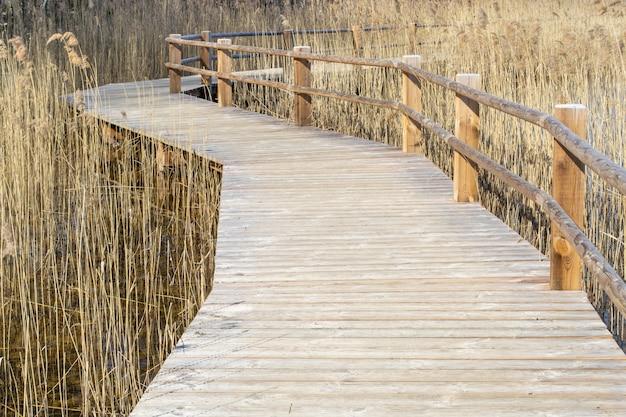 Oever van het meer, riet en pad. houten pad langs het meer.