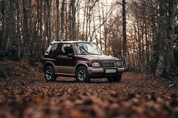 Off-road auto in een pad in het bos met herfstbladeren op de grond en zonsondergang licht