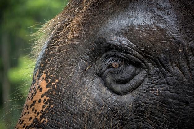 Ogen en huidpatronen van aziatische olifanten.