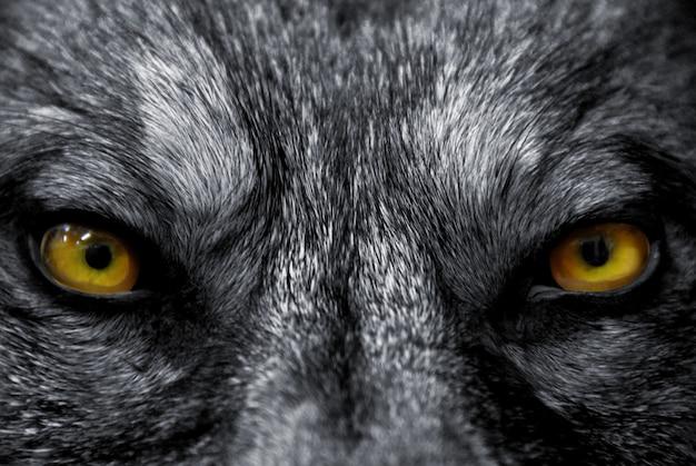 Ogen van wolf