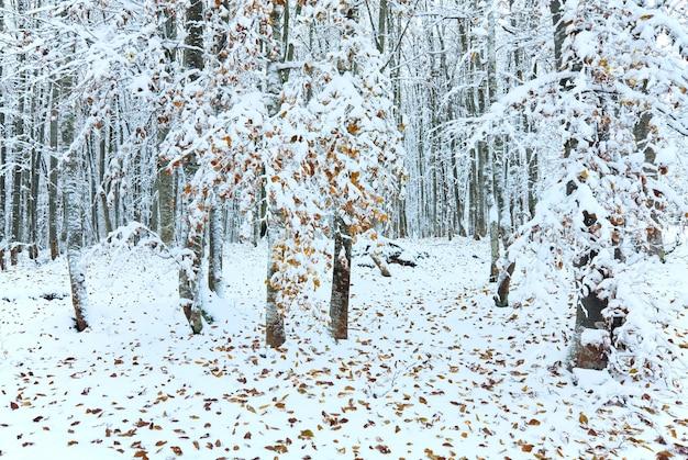 Oktober bergbeukenbos met eerste wintersneeuw en laatste herfstbladeren over