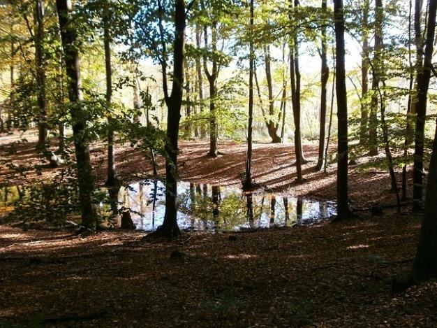 Oktober schorfheide zwembaden landschap herfstbos