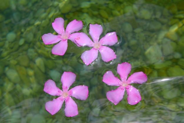 Oleander roze bloemen drijvend in natuurlijk zoet water