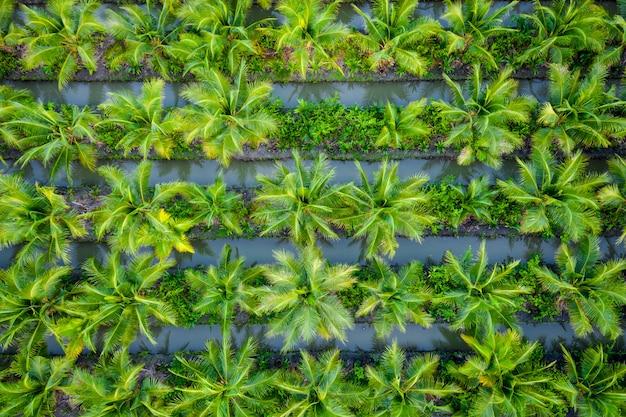 Oliepalmaanplanting of landbouwbedrijf van de kokosnoot het groene gebied landbouwindustrie in thailand