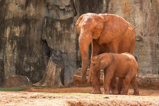 Olifant afrika dier in de natuur.