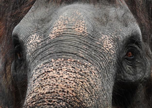 Olifant close-up
