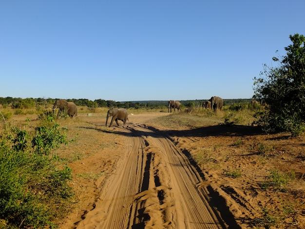 Olifant in chobe nationaal park, botswana, afrika