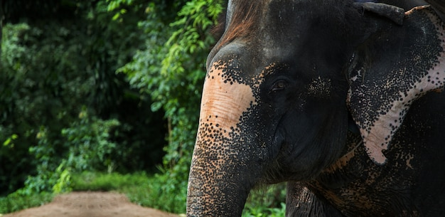 Olifant in de jungle