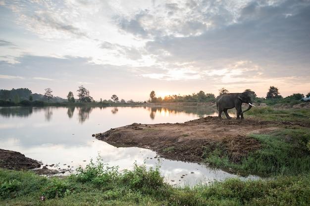 Olifant met zonsopgang zonsondergang over het meer