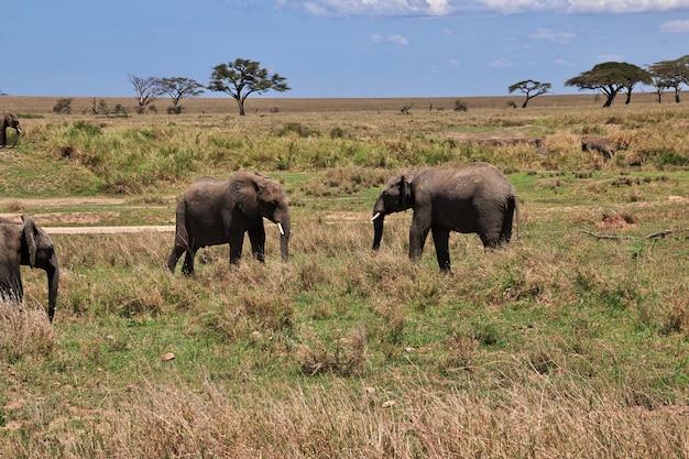 Olifant op safari in kenia en tanzania, afrika