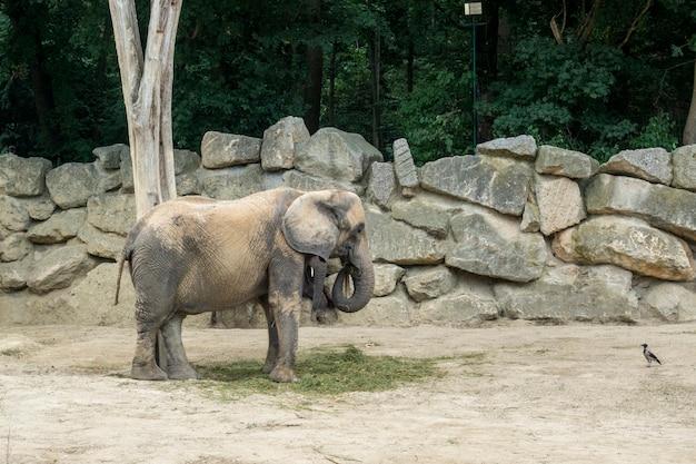 Olifanten genieten van een zonnige lentedag in de dierentuin