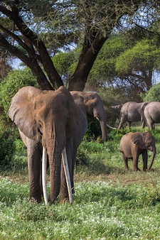 Olifanten in het groene moeras in kenia