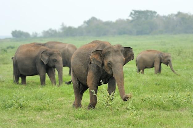 Olifanten in nationaal park