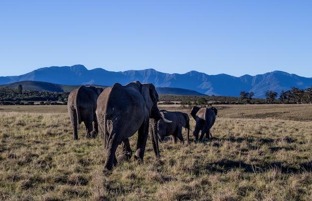 Olifanten lopen door een veld omringd door heuvels onder het zonlicht en een blauwe lucht overdag
