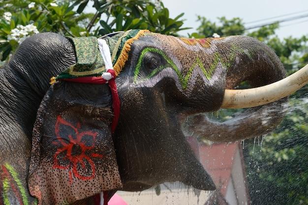 Olifanten verkleden om te spelen in het songkran-water.