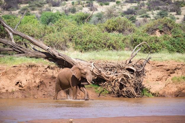 Olifantenfamilie aan de oever van een rivier in het midden van het nationaal park