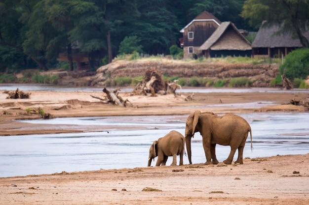 Olifantenfamilie aan de oevers van een rivier midden in het nationaal park