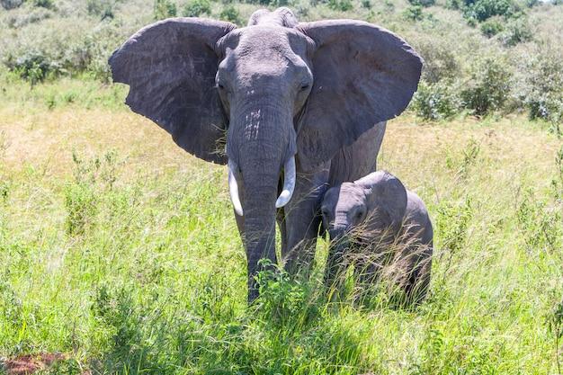 Olifantenfamilie die in de savanne loopt