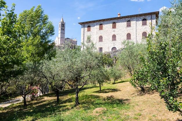 Olijfbomen in het dorp assisi in de regio umbrië, italië. de stad staat bekend om de belangrijkste italiaanse basiliek gewijd aan st. franciscus - san francesco.