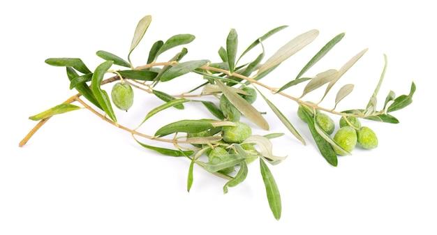 Olijftak geïsoleerd op een witte achtergrond. groene olijven met bladeren.